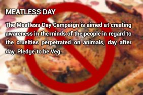 meatlessday